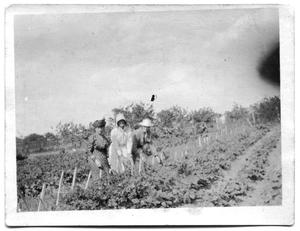 Primary view of object titled 'Three women in the middle of a crop field'.
