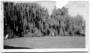 Primary view of object titled '[Photograph of People in Front of Weeping Willows]'.