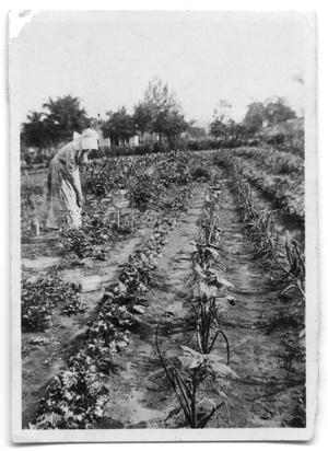 Primary view of object titled 'Woman harvesting crops'.
