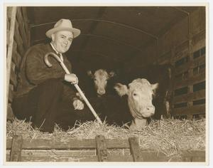 [W. Lee O'Daniel With Cattle]