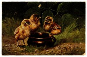Primary view of object titled '[Three Baby Chicks]'.