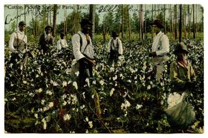 Primary view of object titled '[Cotton Picking Scene of Paris, Tex.]'.