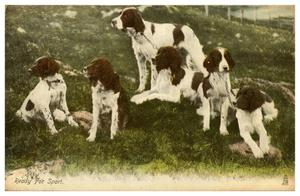 Primary view of object titled '[Six Dogs - Ready for Sport]'.