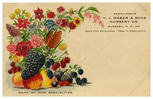 Primary view of object titled '[Flowers and Fruit]'.