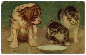Primary view of object titled '[Dog and Two Cats]'.