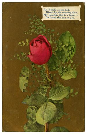 Primary view of object titled '[Rose bud]'.