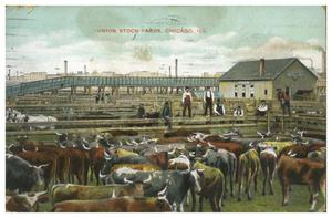 Primary view of object titled 'Union Stock Yards, Chicago, Ill.'.