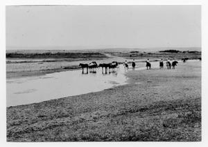 Primary view of object titled '[Photograph of Merydith Family on Wolf Creek]'.