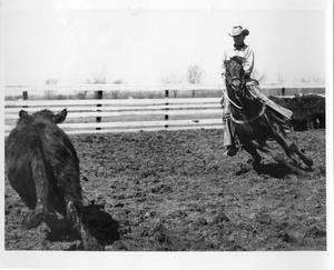 Primary view of object titled '[Photograph of Quarter Horse Paulyana Working]'.