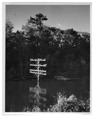 Primary view of object titled '[Photograph of Utility Pole in Deep Water]'.