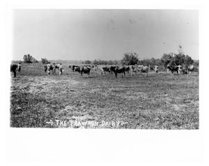 Primary view of object titled 'The Trawhon Dairy Cattle'.