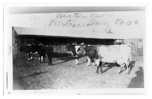 Primary view of object titled 'Burton's Dairy Cows'.