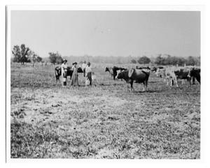 Primary view of object titled 'One Woman and Three Men with Cattle'.