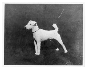 Primary view of object titled 'Fox Terrier'.