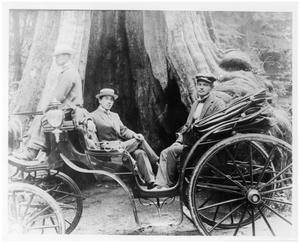 Primary view of object titled '[Two Men in a Carriage by a Large Tree]'.