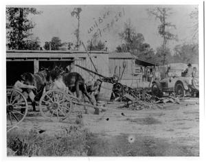 Primary view of object titled '[Wilbur Frenzel Shoeing a Mule in Orangefield, Texas]'.