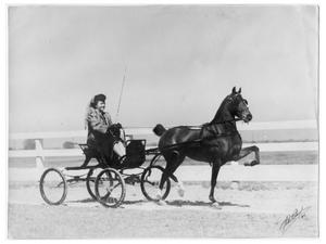 Primary view of object titled '[Woman driving a horse-drawn vehicle]'.
