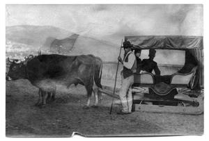 Primary view of object titled '[Cattle and sleigh]'.