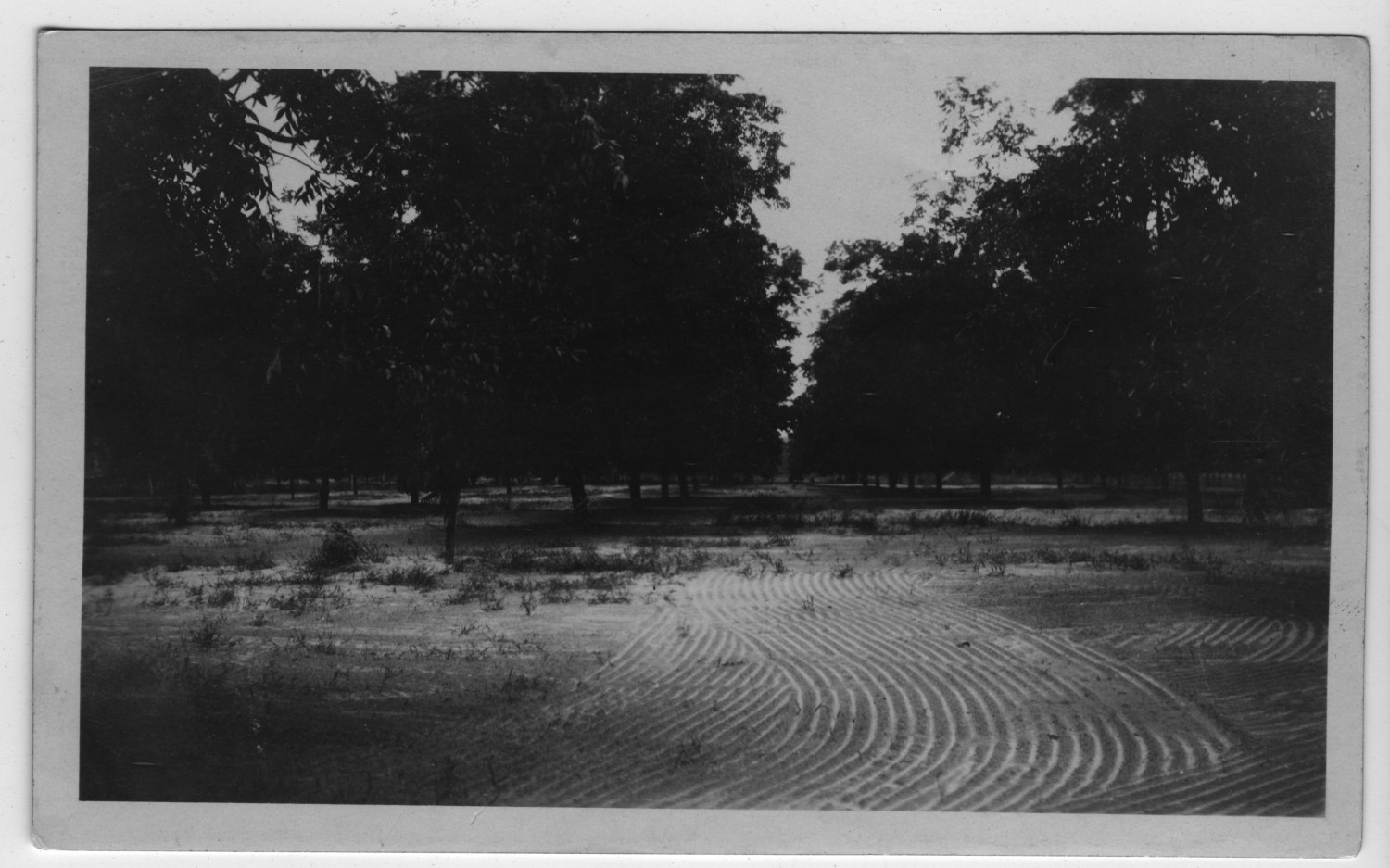 [Butterfield Pecan Orchard, Winona, TX]                                                                                                      [Sequence #]: 1 of 1