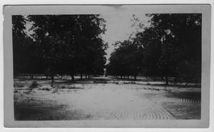 Primary view of object titled '[Butterfield Pecan Orchard, Winona, TX]'.