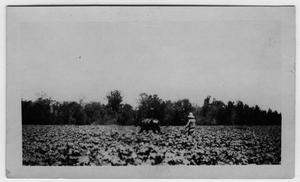 Primary view of object titled '[Man plowing field on Bonner Farm.]'.