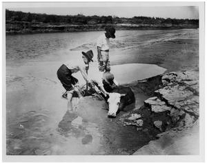 Primary view of object titled 'Cowboys Removing a Cow from a Bog along the Pecos River'.