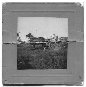 Primary view of object titled '[Mrs. T.W. Wren on horse-drawn wagon]'.