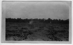 Primary view of object titled '[I.L.Crawford and J.T.Campbell in melon field]'.