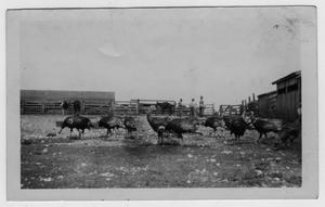 Primary view of object titled '[Ben Peterson Farm]'.