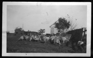 Primary view of object titled '[A. B. Harmonson Farm]'.