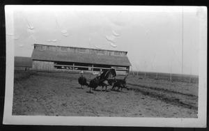 Primary view of object titled '[O. A. Peterson Farm]'.