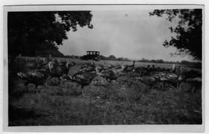 Primary view of object titled '[S. A. Gibson Farm]'.