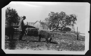 Primary view of object titled '[Harberson Farm]'.