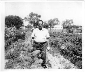 Primary view of object titled '[Max Ortega in herb garden]'.