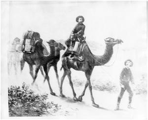 Primary view of object titled '[Example of camels used in overland packing companies]'.