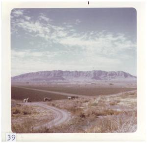 Primary view of object titled '[Big Bend landscape with tractors]'.