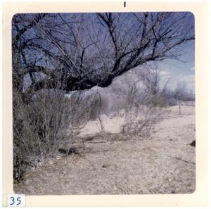 Primary view of object titled '[Tree in Presidio landscape]'.