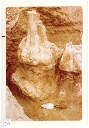 Primary view of object titled '[Collection of fossils in Big Bend]'.
