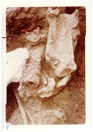Primary view of object titled '[Bones and fossils in Big Bend]'.