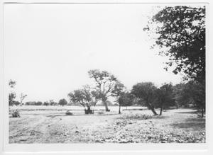 Primary view of object titled '[Field and Trees]'.