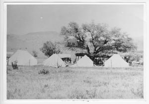Primary view of object titled '[Group of Tents Under a Tree]'.
