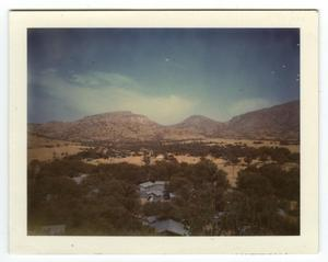 Primary view of object titled '[Photograph of Skillman Grove]'.