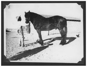 Primary view of object titled '[Photograph of a Horse and Boy]'.