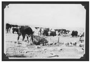 Primary view of object titled '[Cattle at a Watering Trough]'.