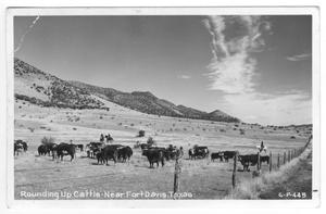 Primary view of object titled '[Postcard of Cattle Round-Up]'.