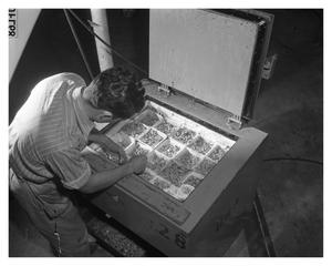 Primary view of object titled 'D.F. Grimes removing rivets from the ice box'.