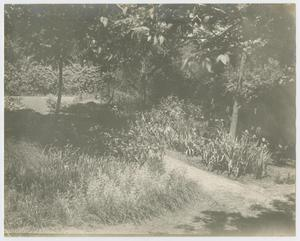 [Photograph of Sharpe Family Garden]
