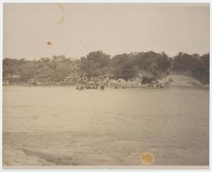Primary view of object titled 'Bean Robinson Cattle Crossing North of Palo Pinto'.