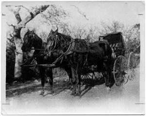 Primary view of object titled 'J.M. Treadwell Driving a Buggy'.