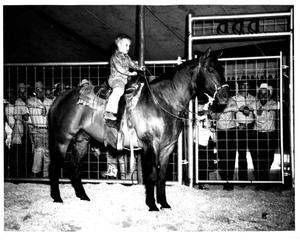 "Primary view of object titled 'Young Boy atop ""Pretty Buck"" at Fort Worth Stock Show'."